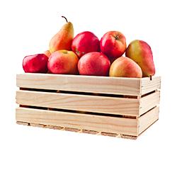 Zbieraj owoce